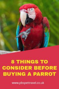 Thinking of buying a parrot? Before you do so, here are eight questions that you should be able to answer honestly. A good for any potential parrot owner.