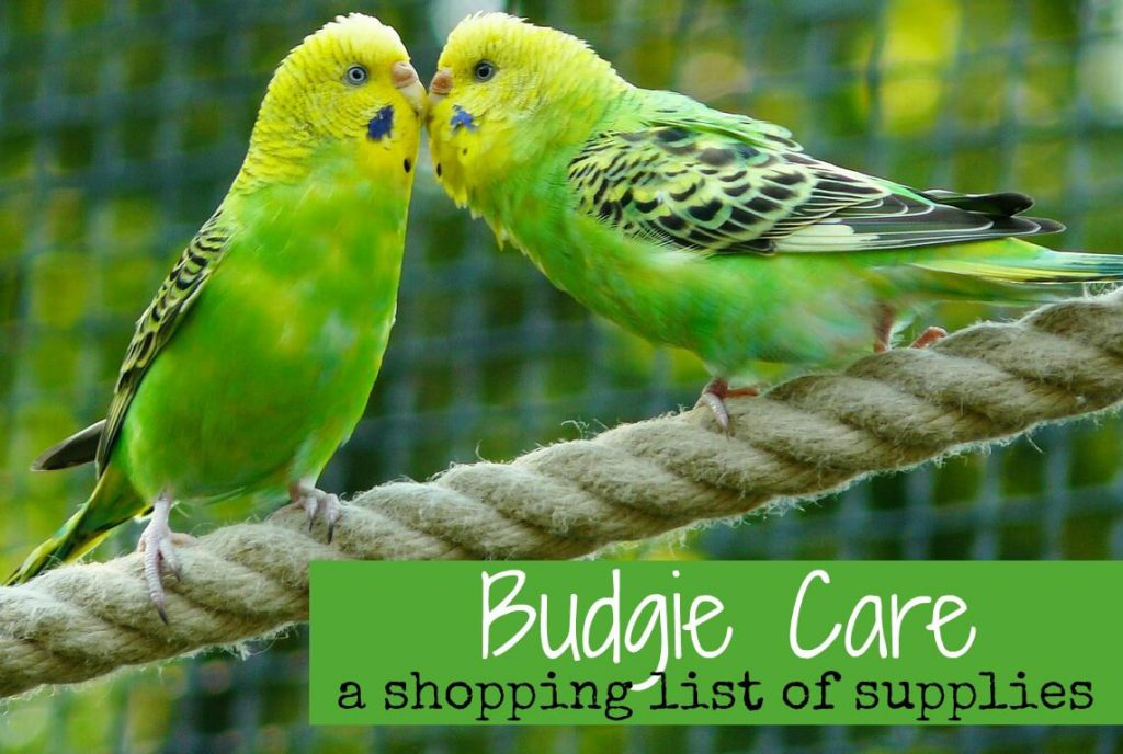 budgie-care-supplies