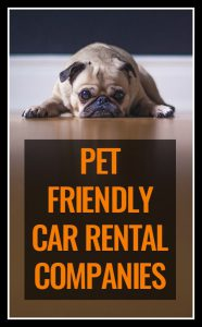 Looking to hire a car with a company that allows pets? There aren't *many* companies - but there are a few. Here's a list of all the rules surrounding car hire firms that allow pets.