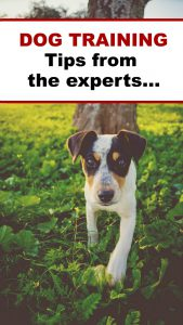 Dog training tips from a range of experts. Find the top training tips from blogging experts around the world.