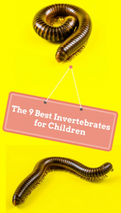Looking for an easy pet for children? Why not consider an invertebrate. They cost very little money to buy or look after, have a short lifespan and generally require minimal care to look after. They're also ideal for children with allergies.