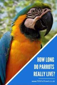 Ever wondered how long parrots really live? This article discusses the lifespan of a range of different parrots, in order to summarize how long parrots really live.